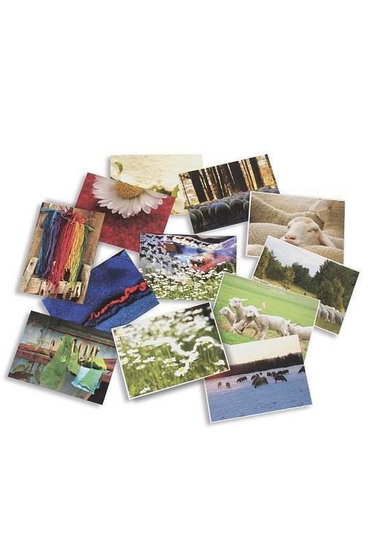 Postkarten-Set (Wolle und Schafe)