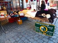 Vorschau: Marktstand_Finkhof